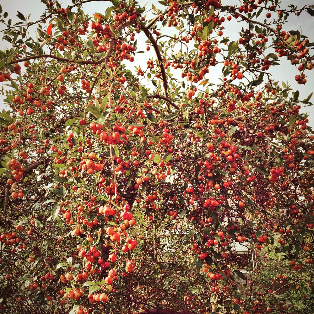 Cherry Tree (Philadelphia, PA), 2015