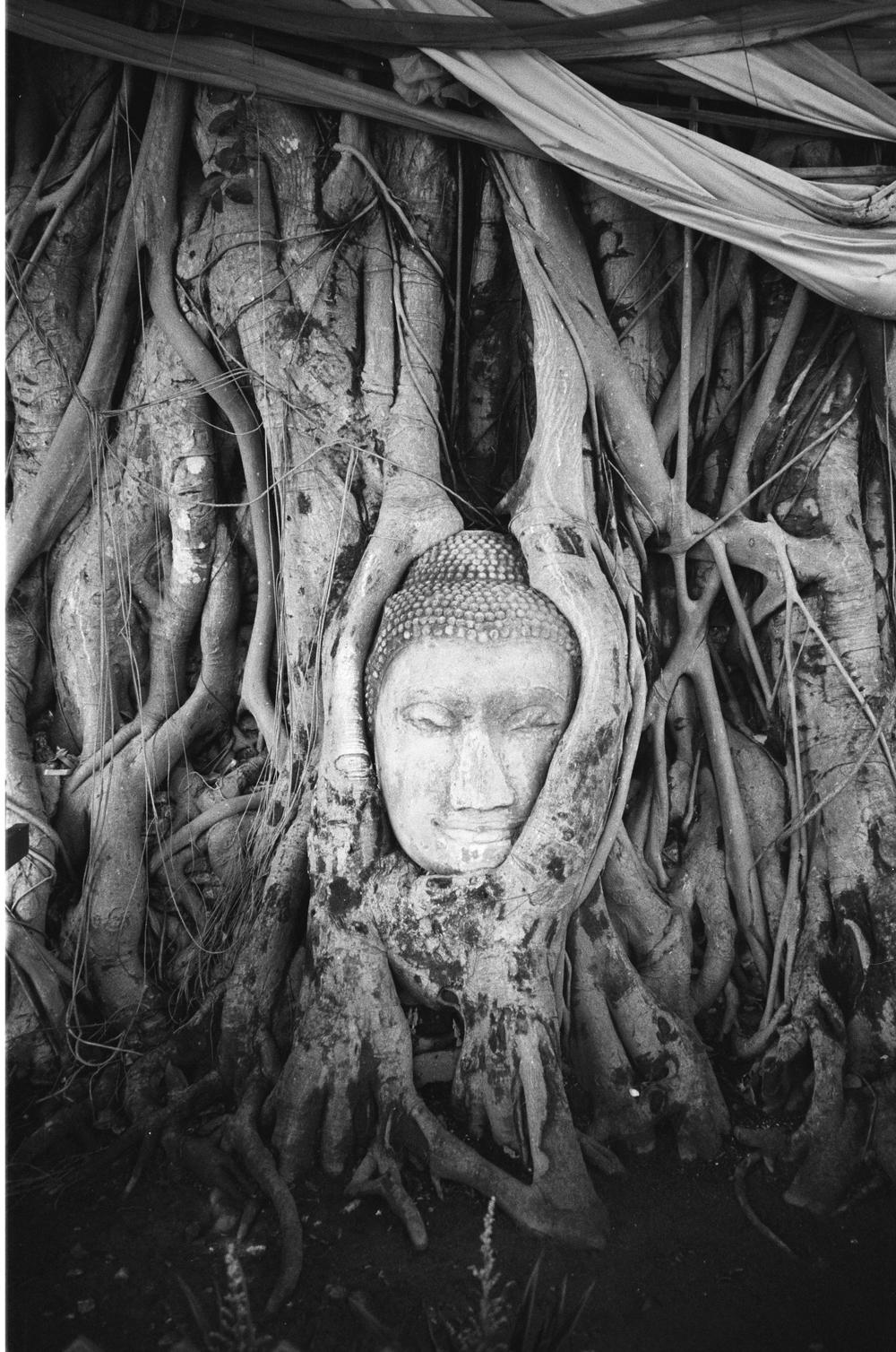 Buddha Overgrown by Bodhi Tree, Wat Phra Mahathat, Ayuthaya, Thailand, 2005