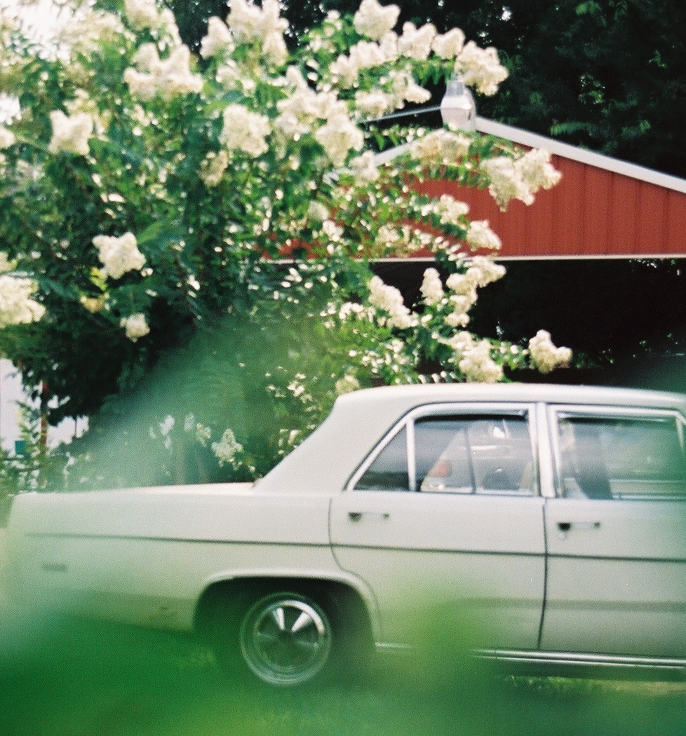 White Car and Magnolia Tree, Memphis, Tennessee, 2004