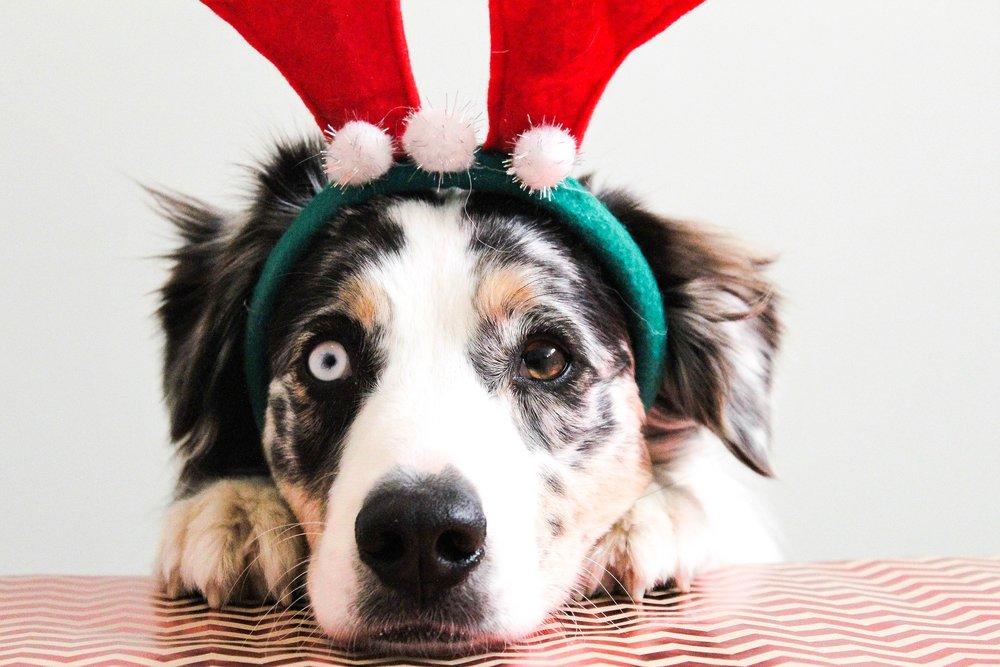 animal-lover-gift-ideas