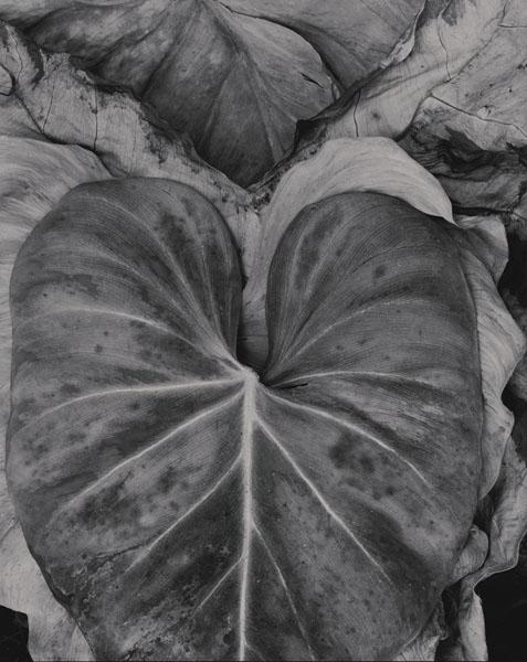 Garden-Leaf- Fractal CluePADA2.jpg