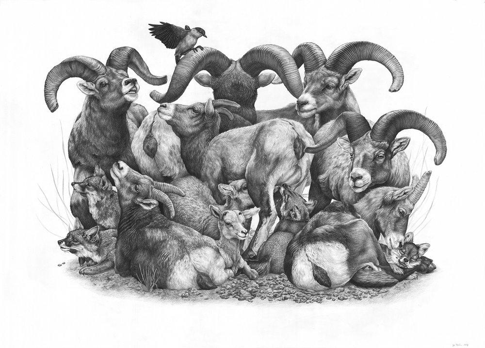 """Prey, Graphite on Paper, 42 """"x 30"""" - теперь в Постоянном собрании Национального музея искусств дикой природы"""