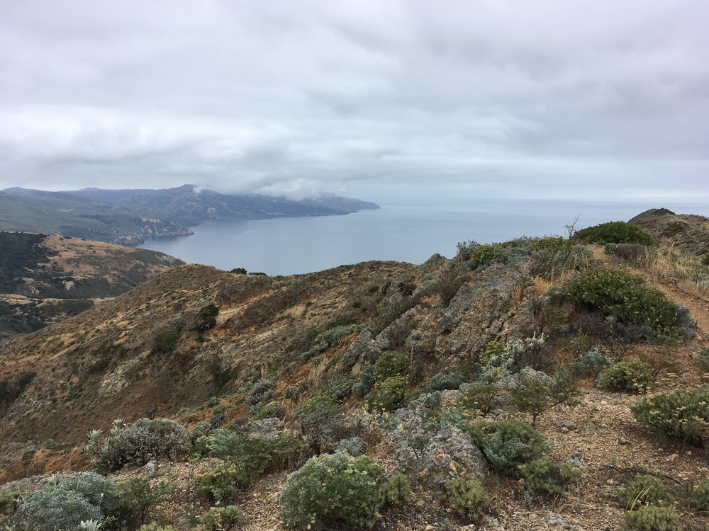 Photo of Santa Cruz Island from a research hike