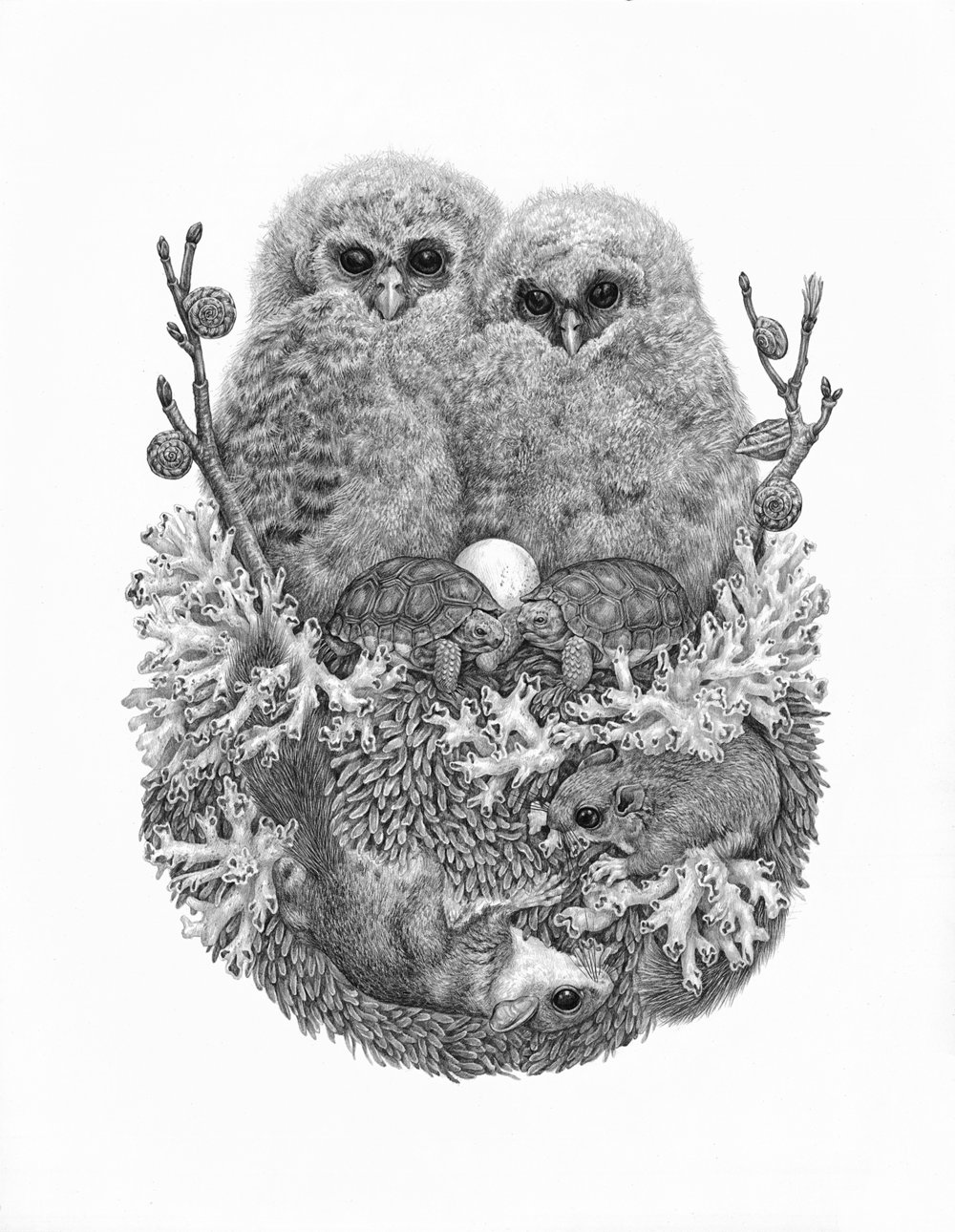 "Lichens , Graphite on Paper, 2016, 14"" x 18"""