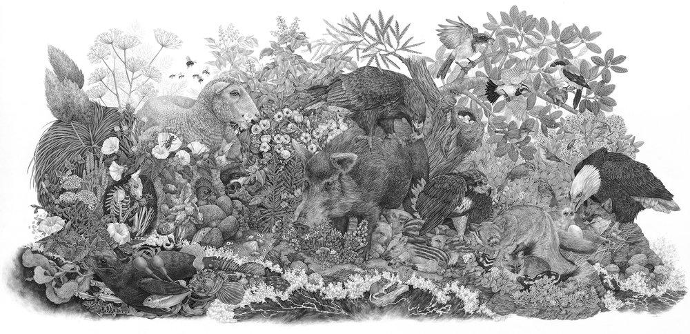 Limuw | Santa Cruz Island, 7.5' x 4', Graphite on Paper, 2017  Click here to purchase through Antler Gallery   Details below