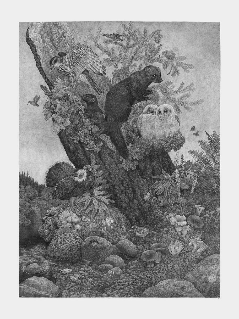 "Old Growth, 60"" x 45"", Graphite on paper, 2018"