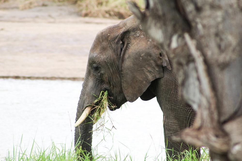 Elephant Tanzania Lengo Football Academy