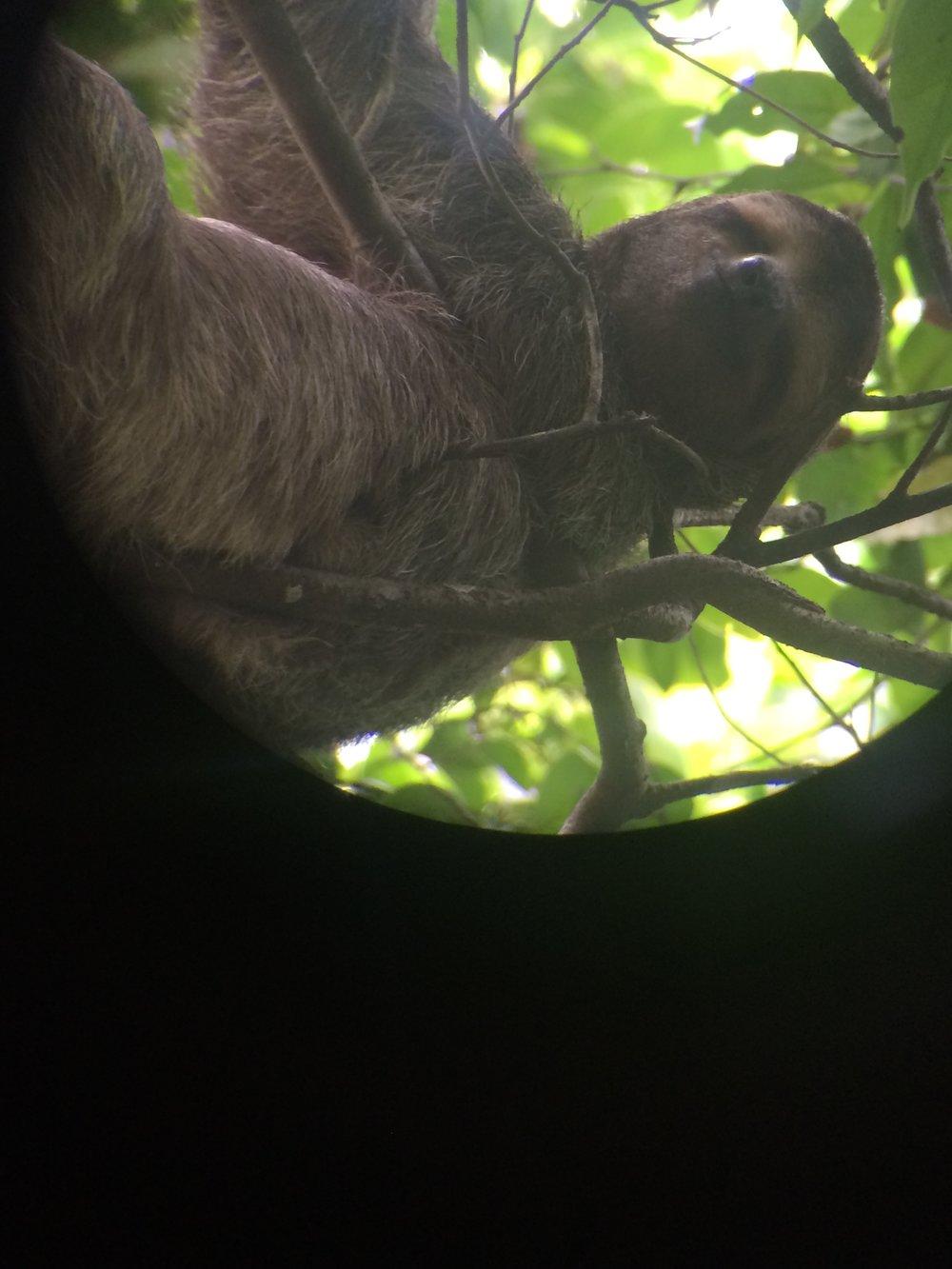 Sloth - Who answers