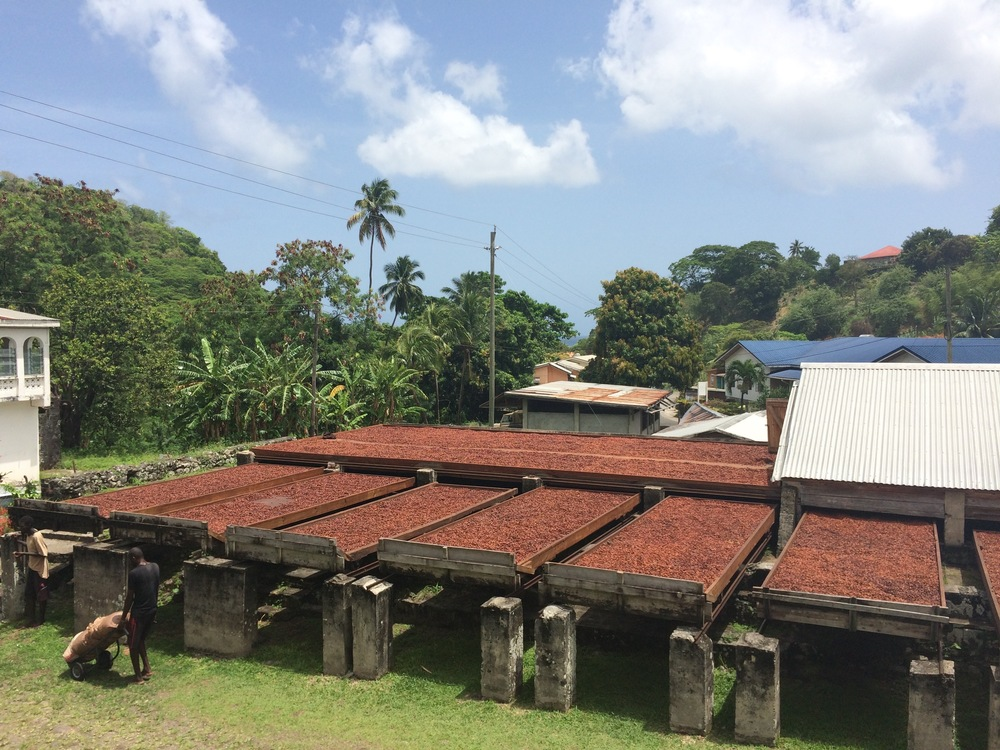 Cacao drying in the sun at the Diamond Chocolate Company in Grenada