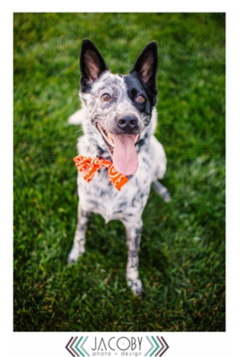 Scout the dog, photo by Jacoby Design, courtesy of Damaris Graves