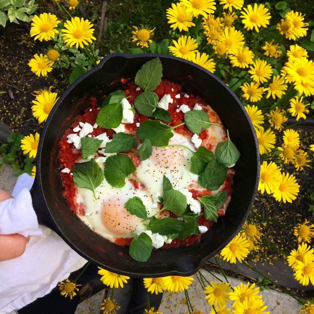 Backyard Herbal Shakshuka