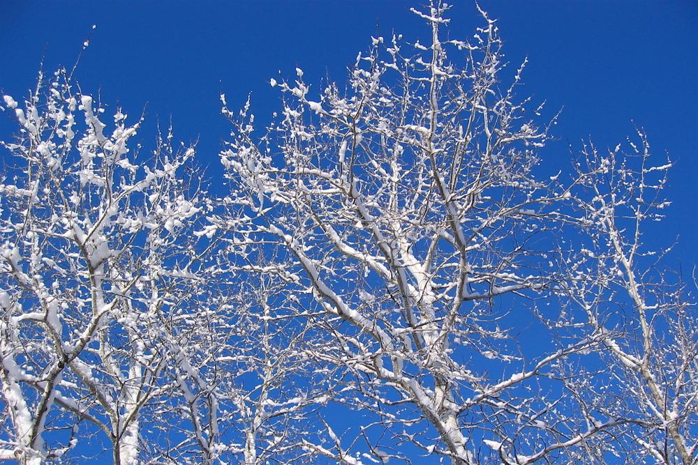Wonderful,sunny, pristine  Wintertime...