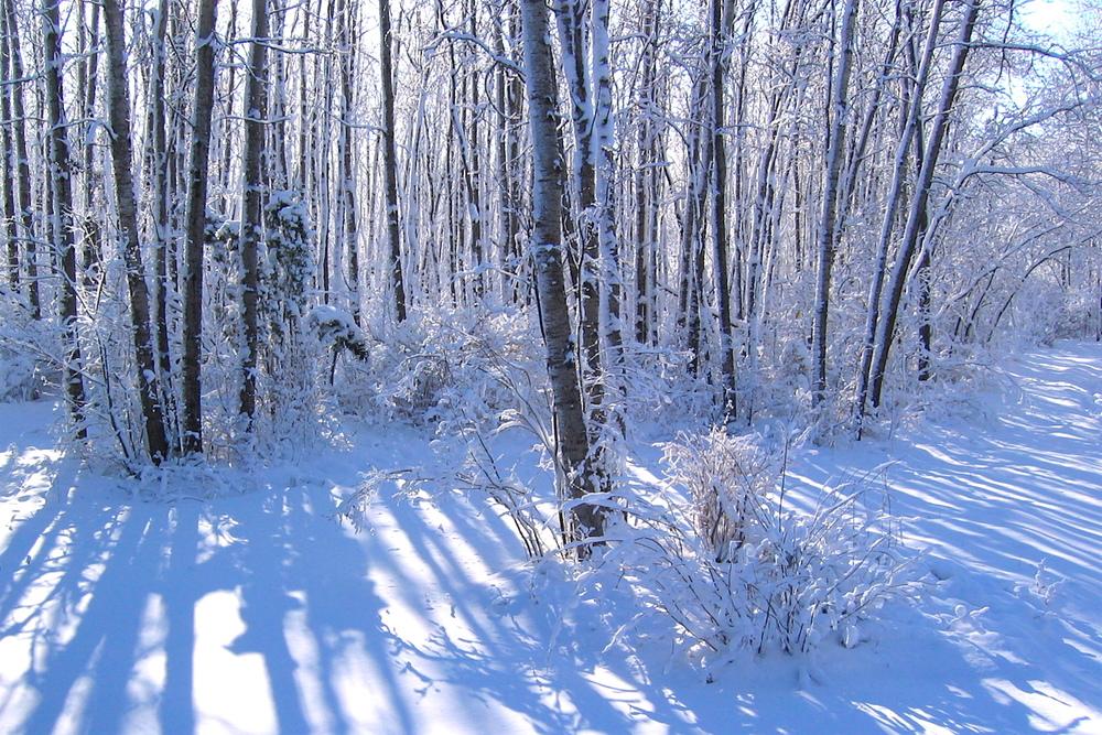 A snowy driveway...