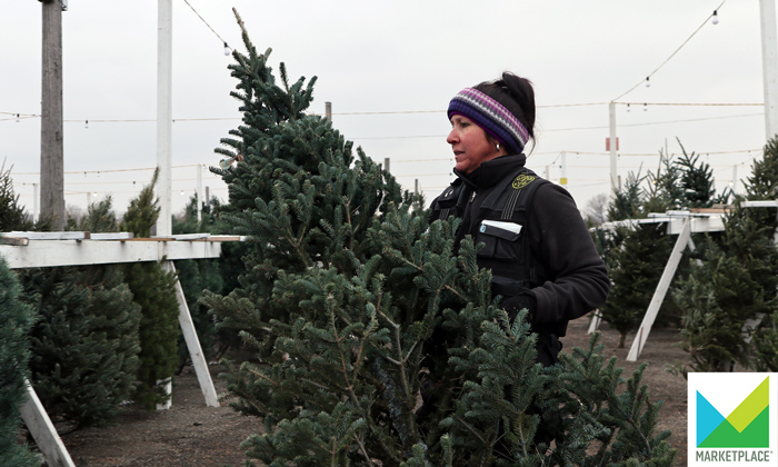In your hunt for holiday deals, don't forget the Christmas tree -