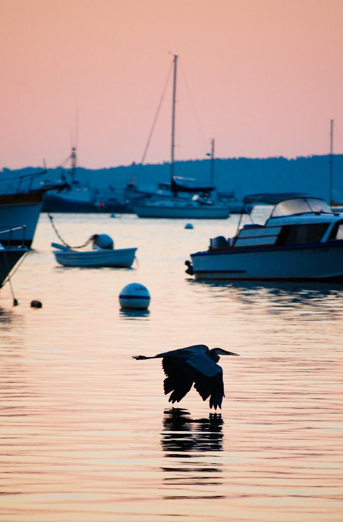 Maine Boats Portland Blue heron