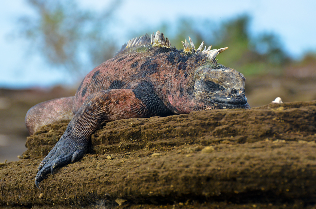 galapagos animals wildlife
