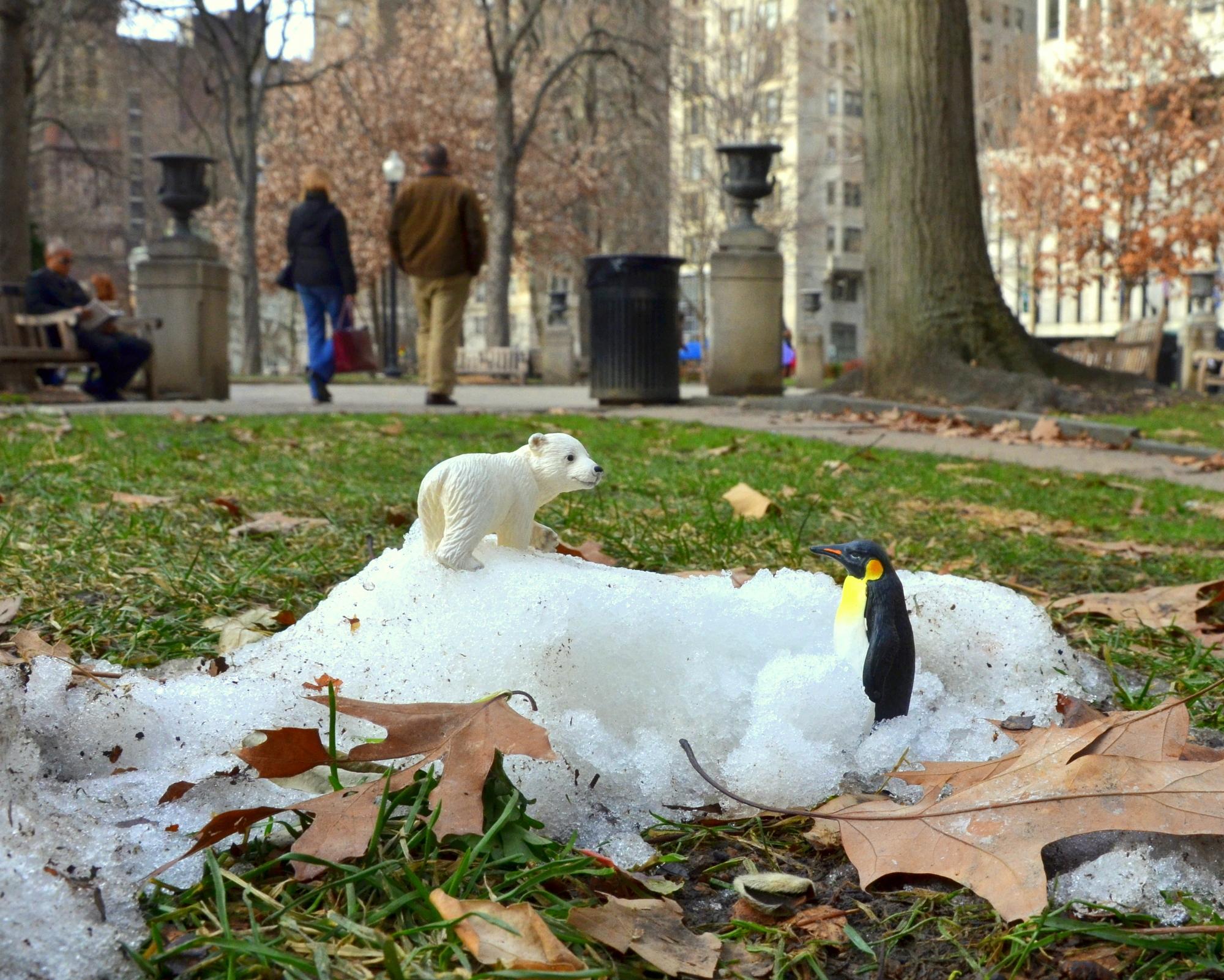 Polar Bear Penguin Rittenhouse Square Philadelphia