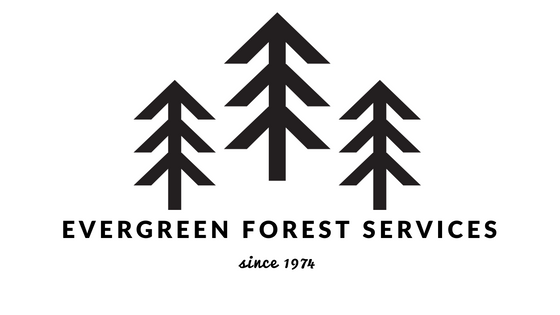 Evergreen Forest Services