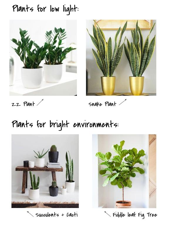 Indoor Plants for Every Environment