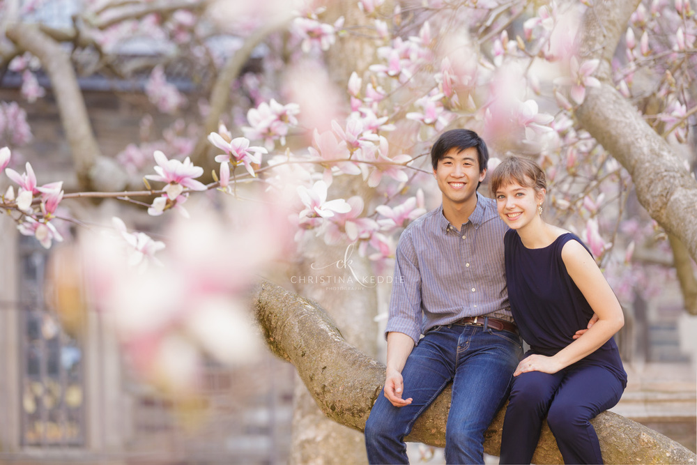 Engaged couple sitting in magnolia tree | Christina Keddie Photography | Princeton NJ engagement photographer