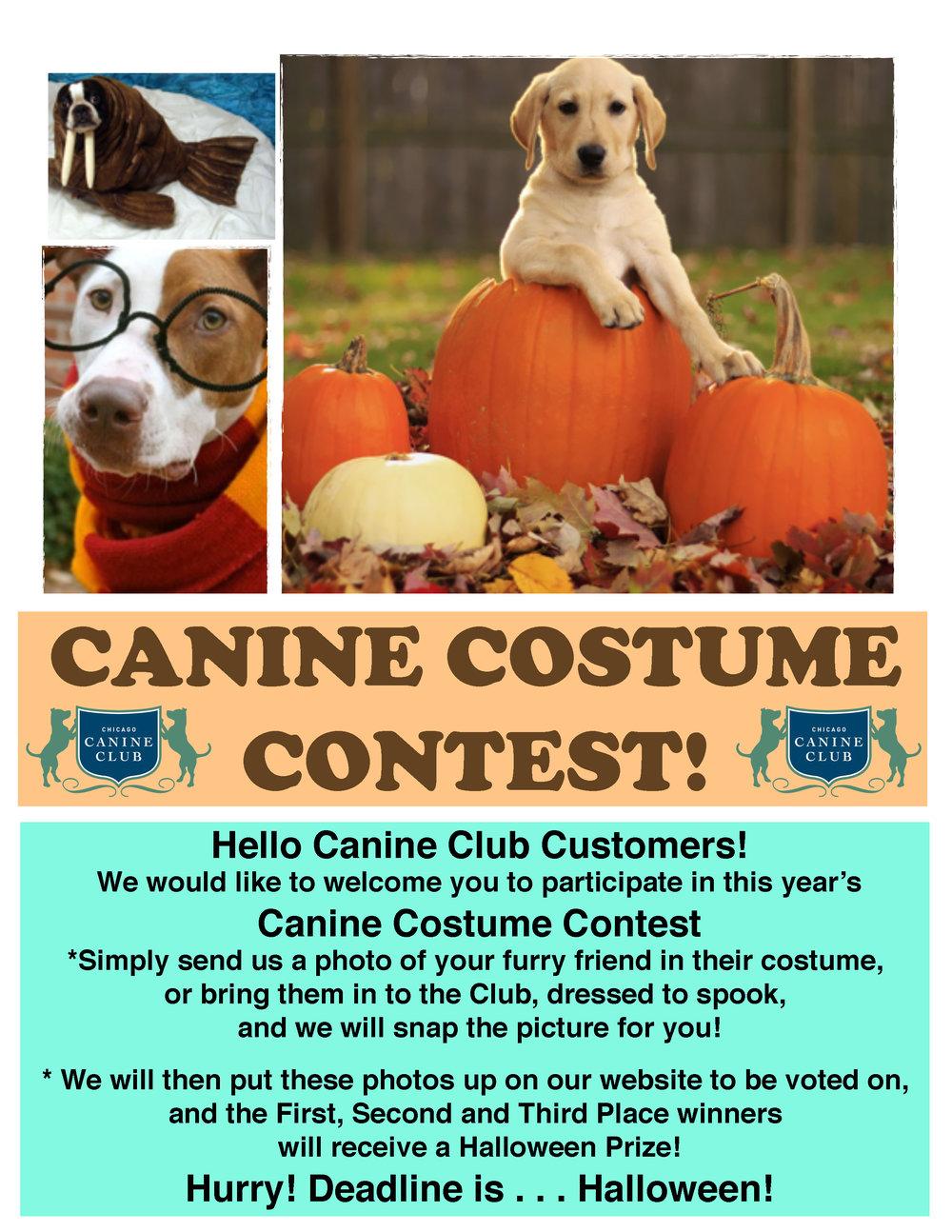 Canine club 3.jpg