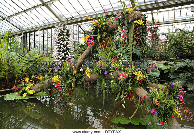 orchid-show-in-the-princess-of-wales-conservatory-kew-garden-dtyfax.jpg