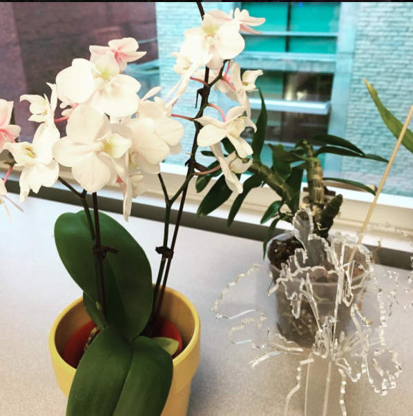 office orchid - champagne.png