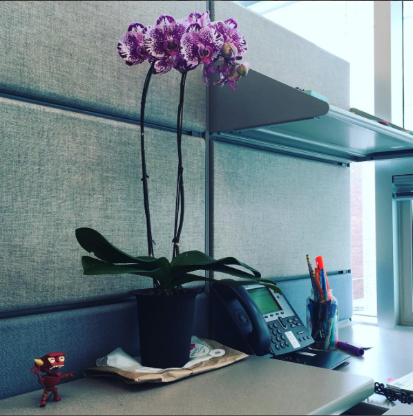 office orchid champagne.png
