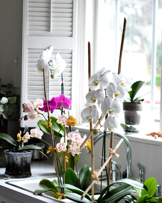 Water your orchid in the sink. Keep it in a plastic pot inside a decorative pot so that you can take it out of the decorative pot to water.