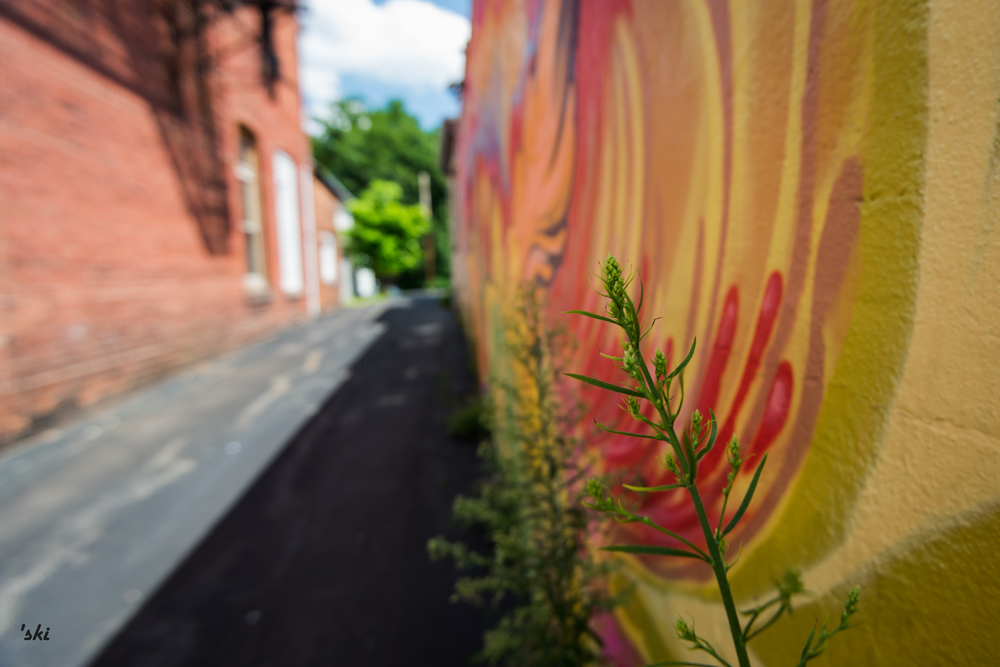 Alleyway of Life