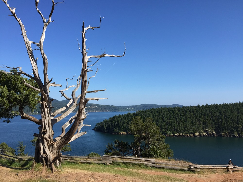 Washington Park Anacortes, 2015