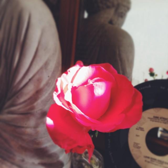 budha rose