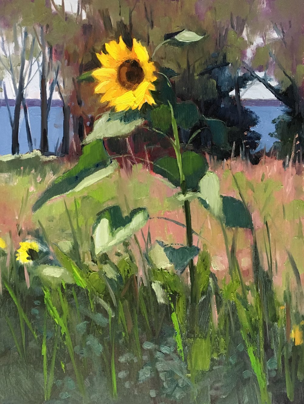 Patuxent Sunflower