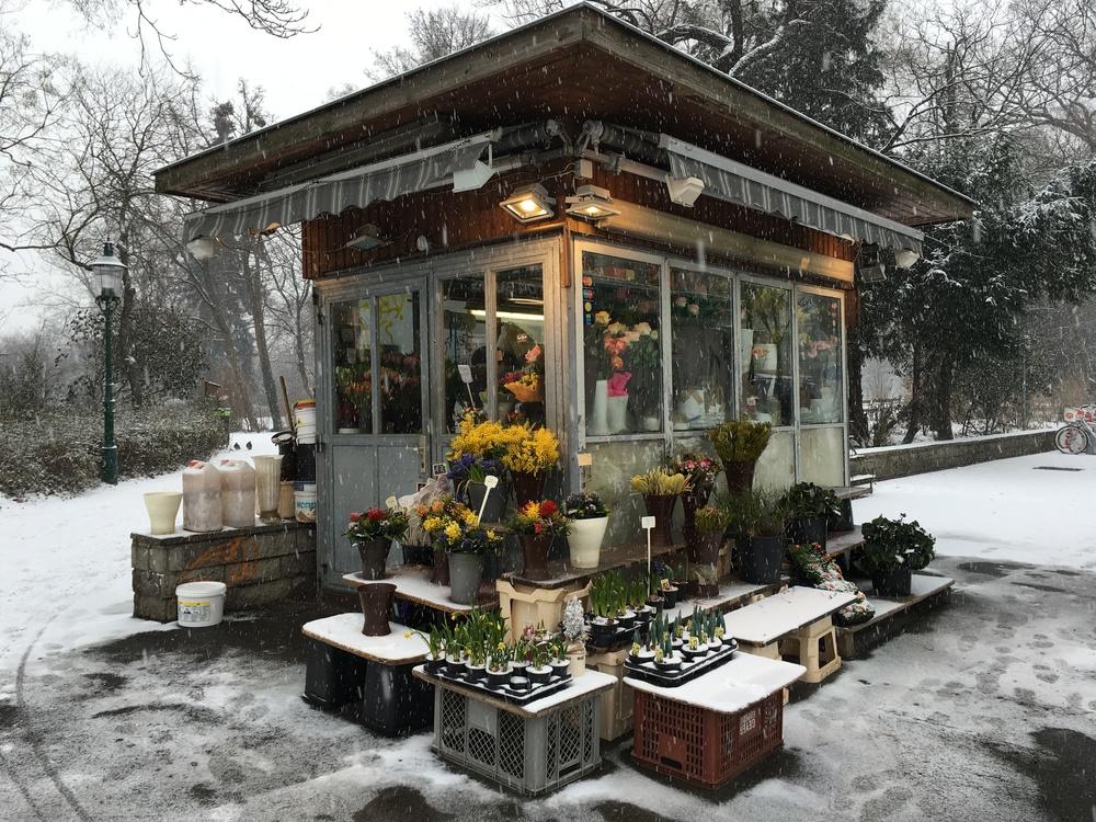 Schnee Bloomin' (2016)