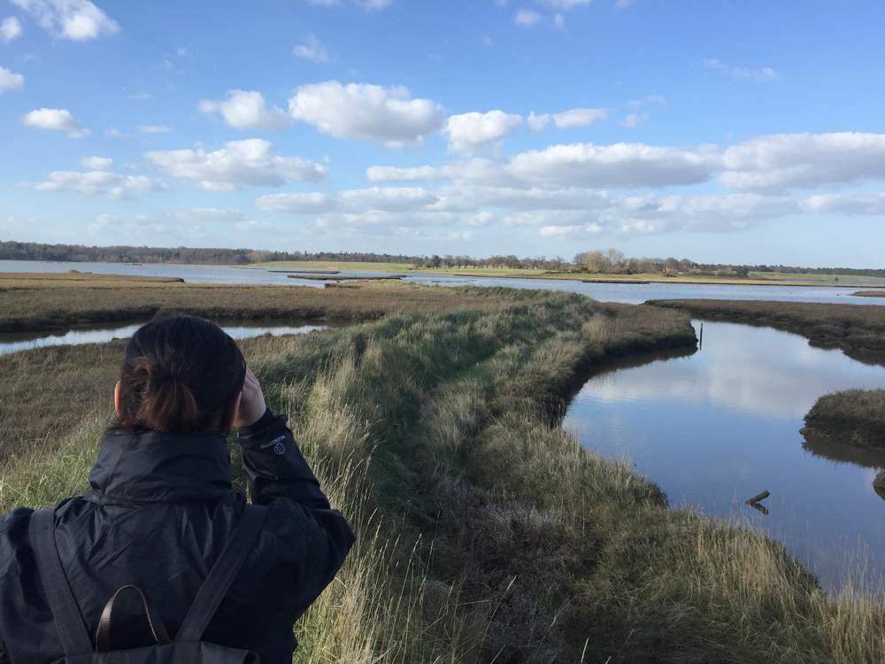 Blythburgh marshes