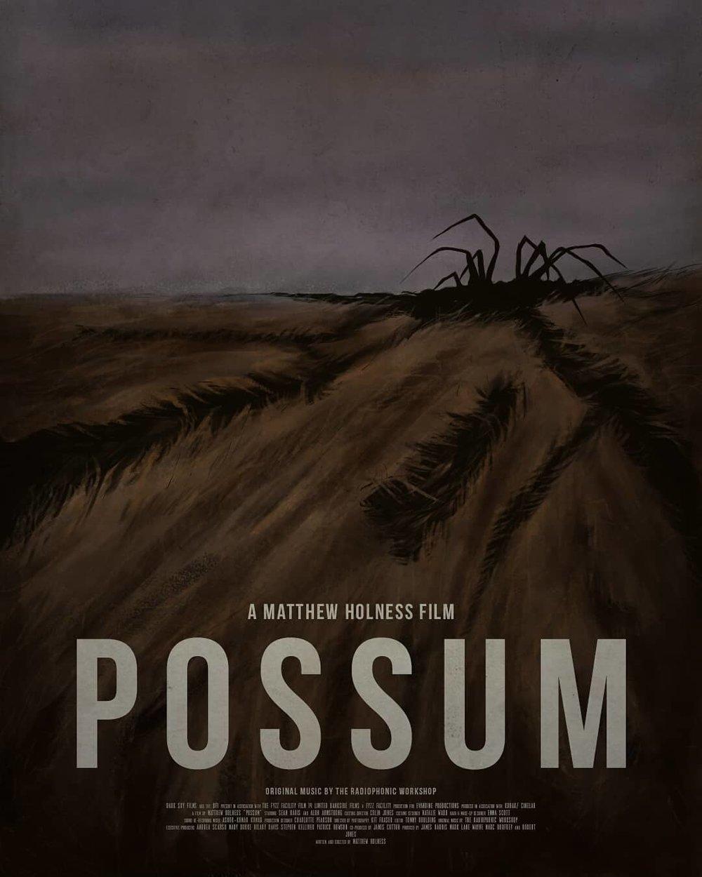 possum4.jpg