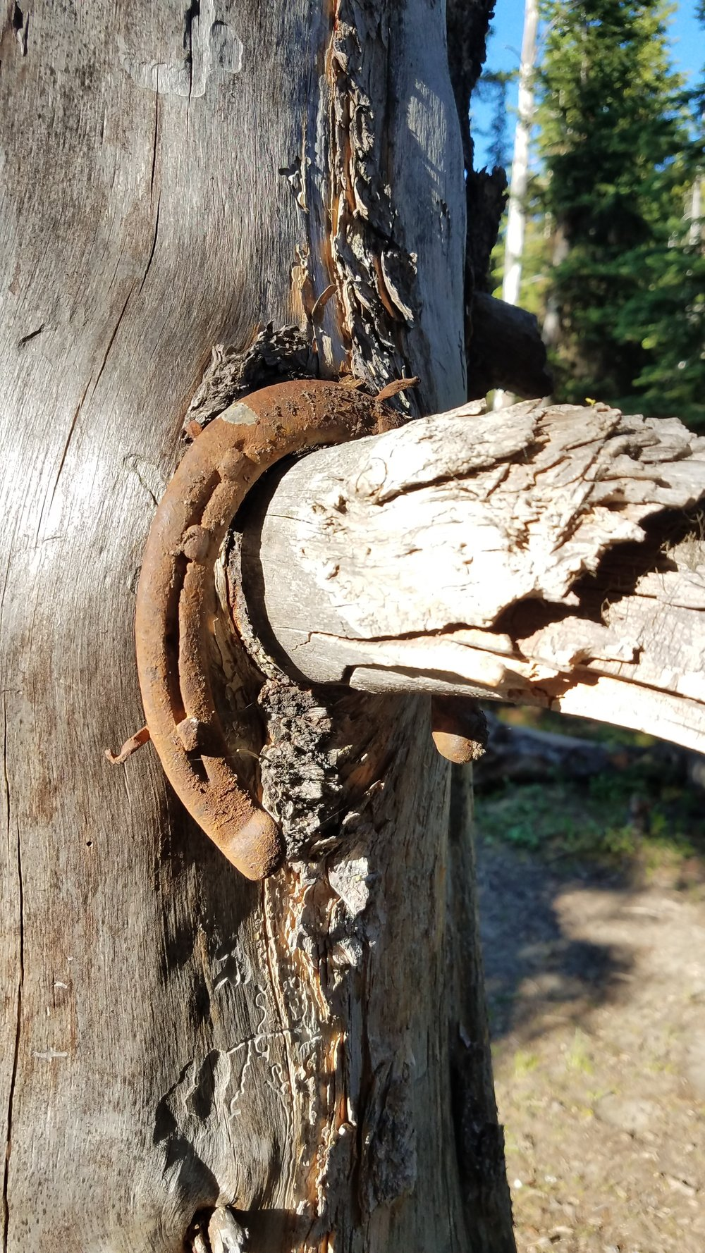An old horseshoe hangs from a tree where I camped one night.