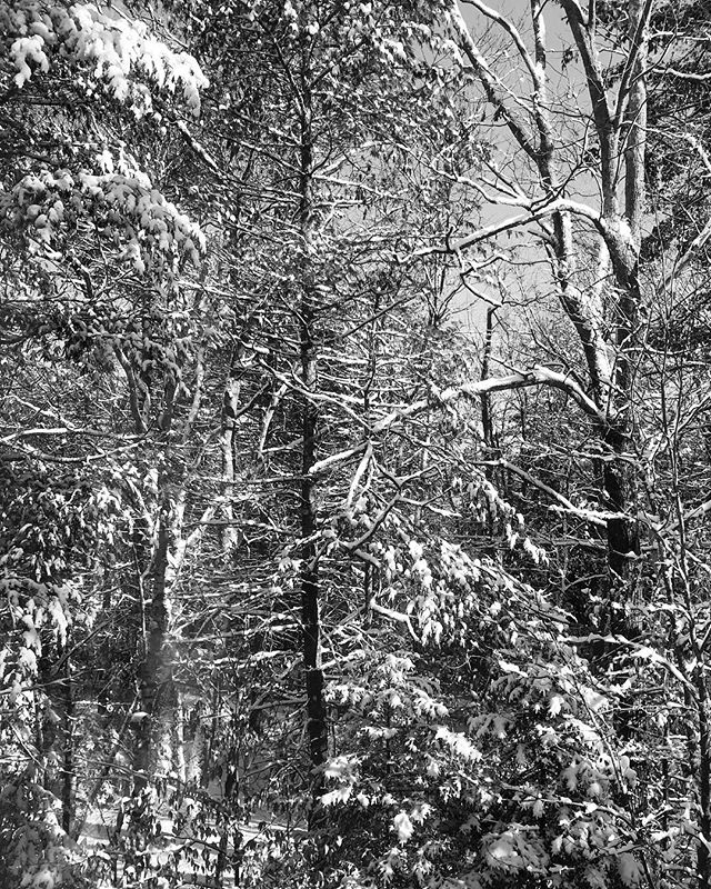 Winter, sometimes all I️ see is a mesmerizing design of black and whites. #iphone #massachusettsphotographer #newenglandphotography #landscapephotography #winter #blackandwhitephotography
