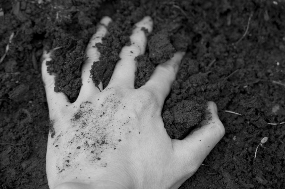 hands in dirt 004.jpg
