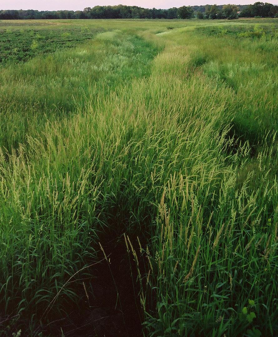 Grass field black hole crop.jpg