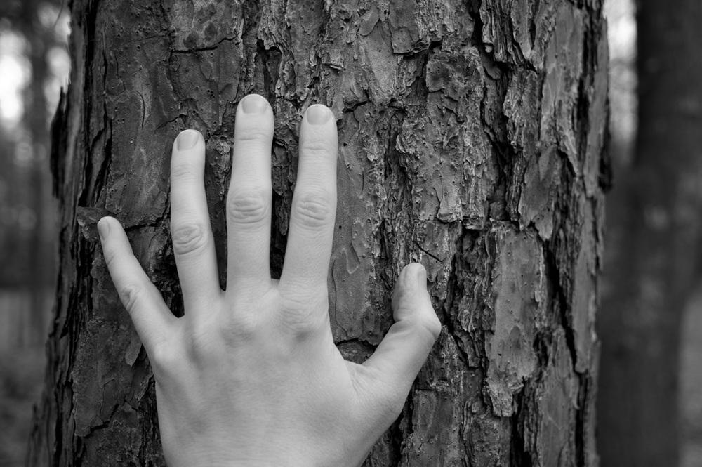 hand on tree 025.jpg