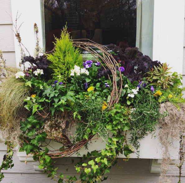 windowbox outdoor planter grass lemon cypress spanish moss angel vine & Roots Aboutintivar.Com
