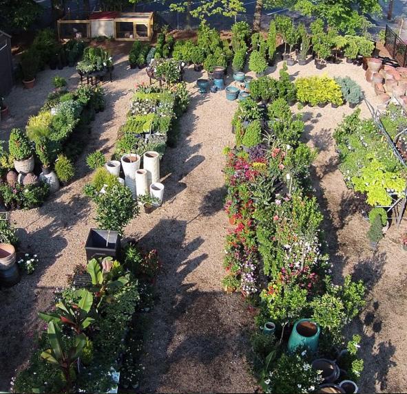 Windowbox, Outdoor Planter, Grass, Lemon Cypress, Spanish Moss, Angel Vine,