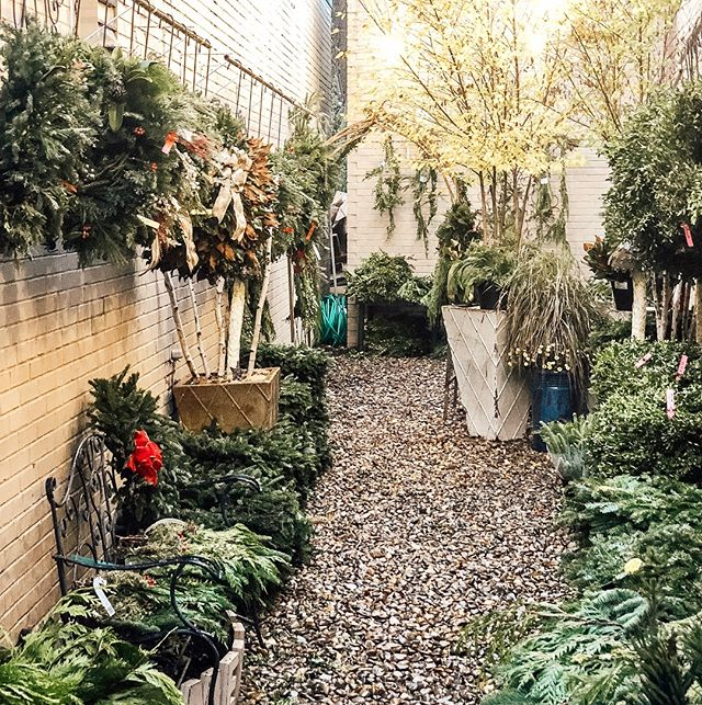 It's not too late to get your Fresh Wreaths! Our Alleyway is gorgeous and smelling so good! If you drove by and noticed the wreath tent was gone it's because that little winter storm did some damage but don't worry the wreaths are fine and ready for you!. . . . . #freshwreaths #greenvillesc #yeahthatgreenville #onlyonaugusta