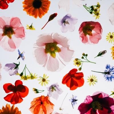 floweressences.jpg