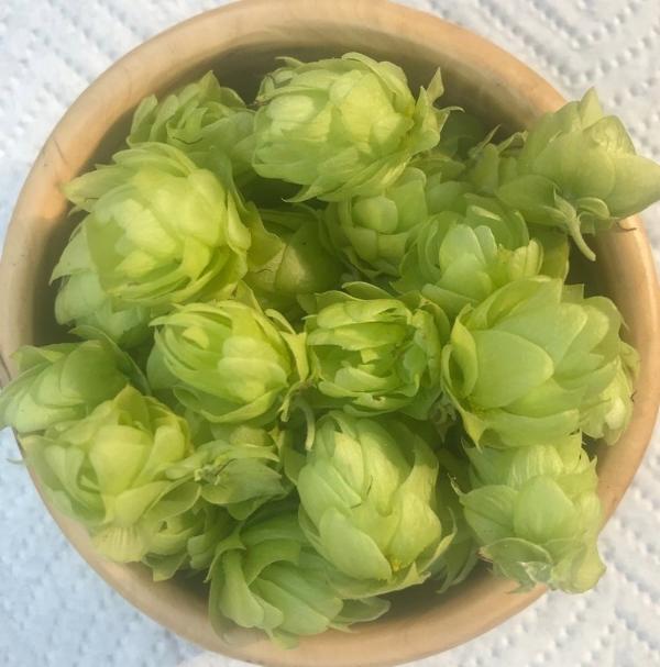 hops-1.jpg