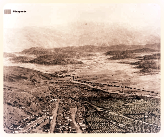 It all started in Los Angeles... - The first commercial winery in California was built in 1833, under a giant 400-year old sycamore named