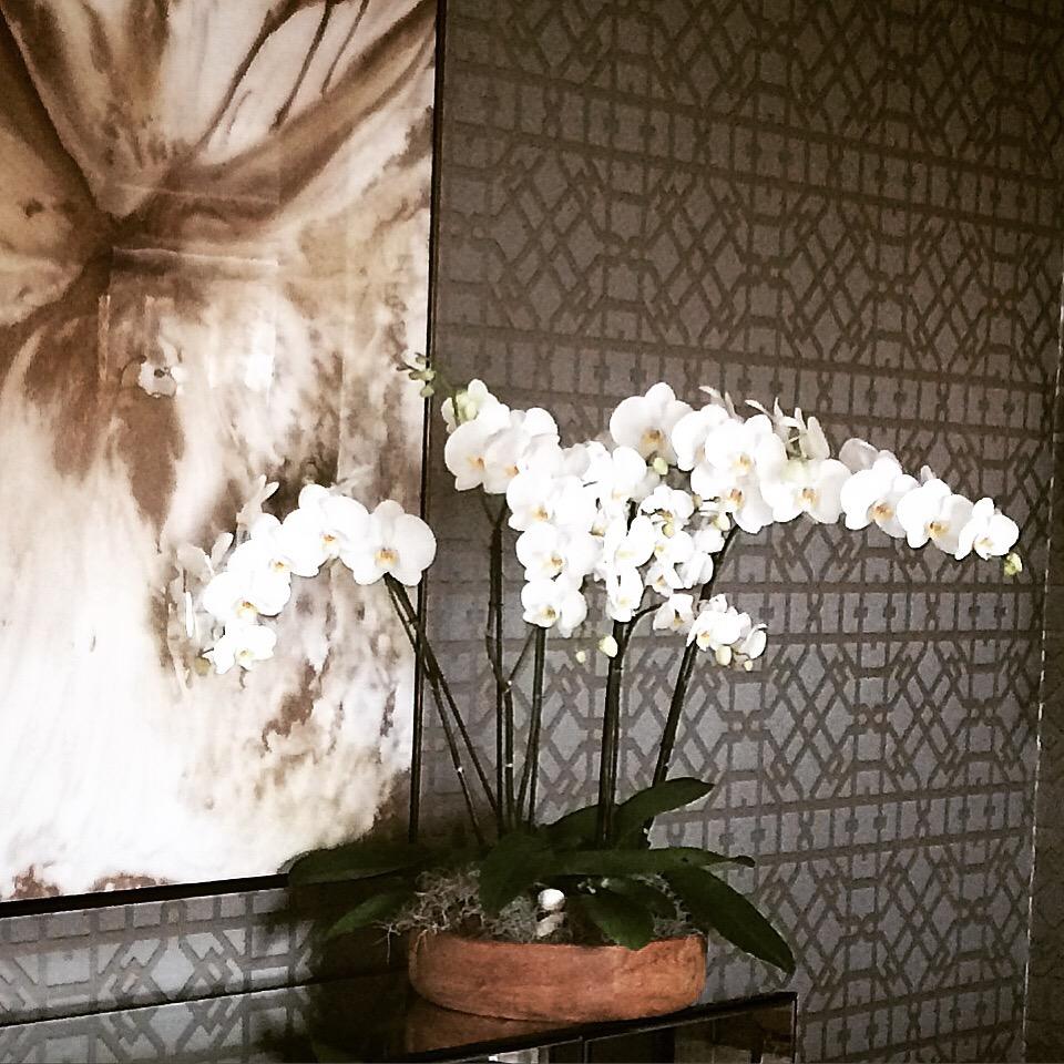 orquideas en interiorismo