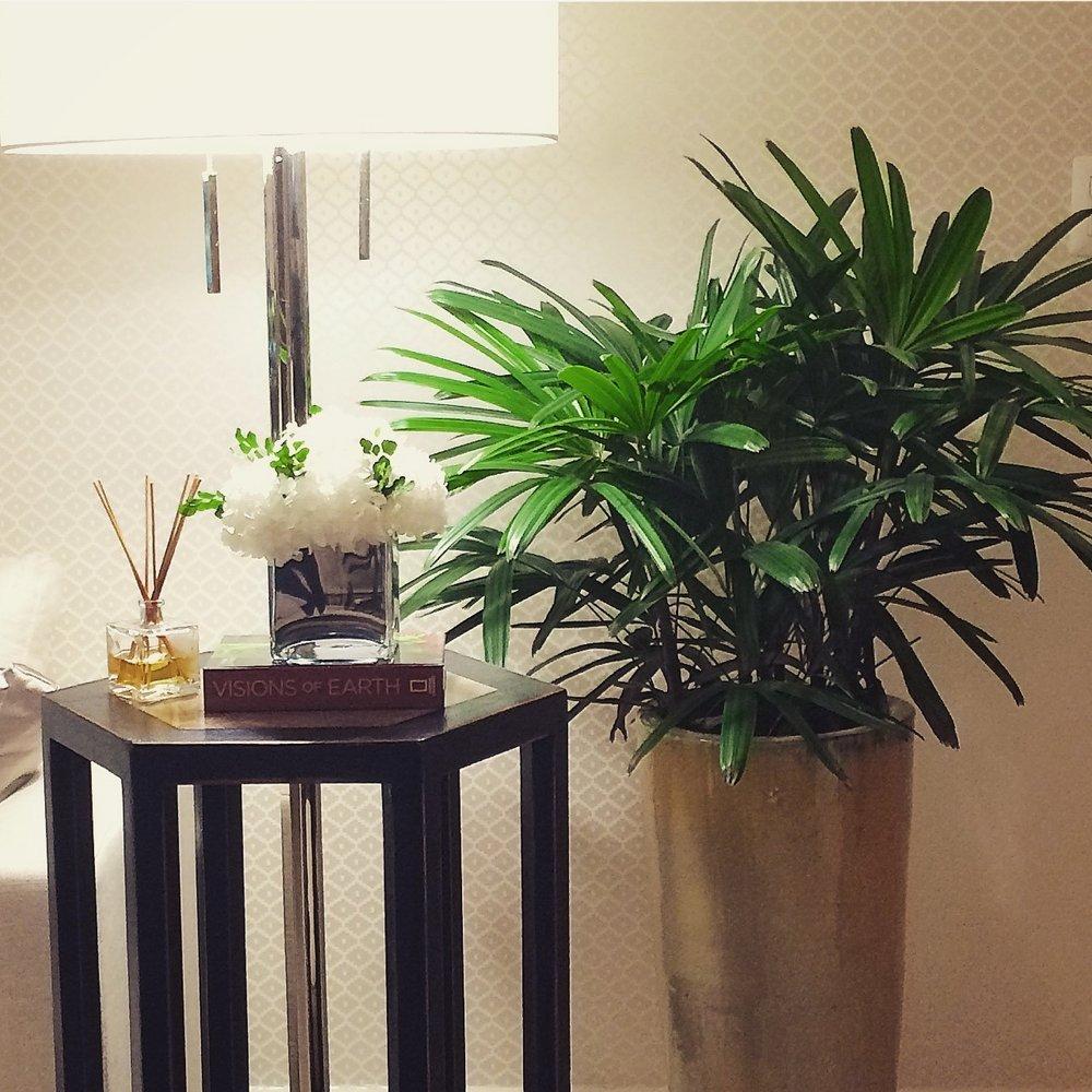 plantas en interiorismo