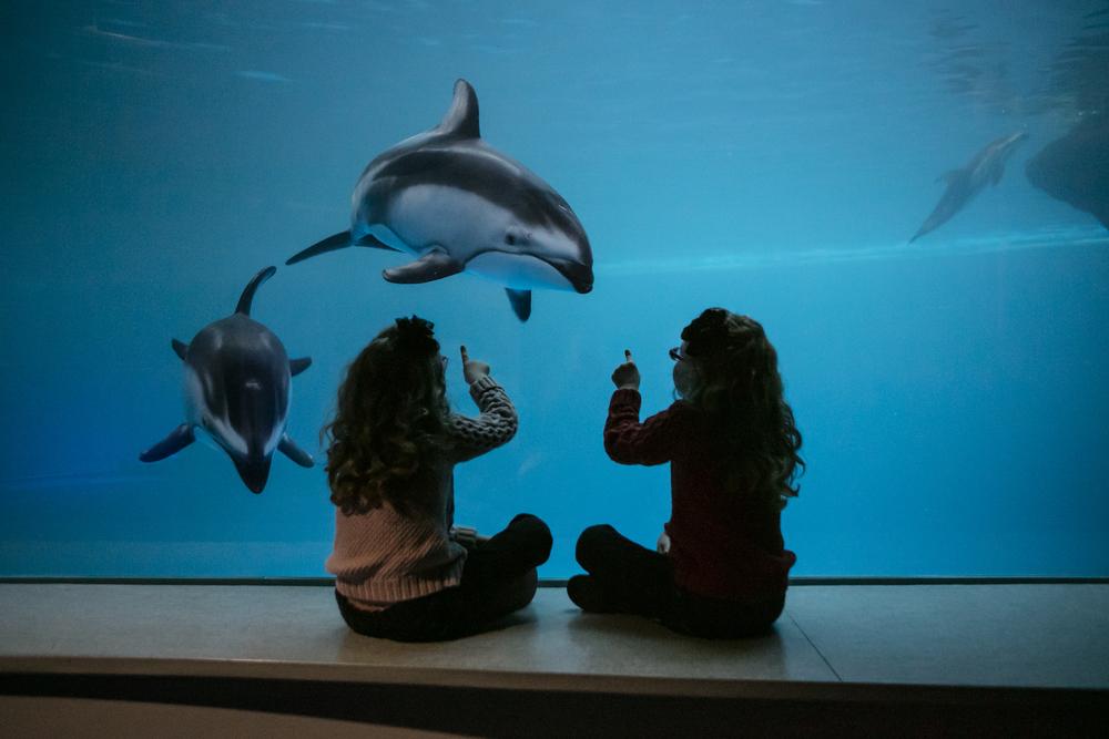 2/Shedd Aquarium